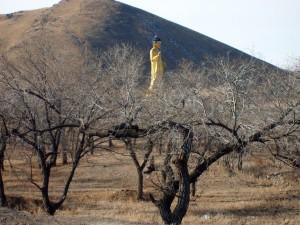 Socha Buddhy v Ulaanbaataru