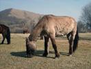 Koně v Tereldži.