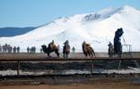 Velbloudí polo v Ulaanbaataru.